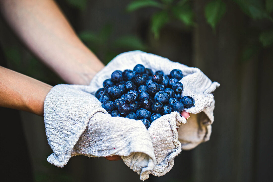 Pick Blueberries